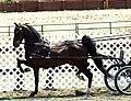Hackney Park Horse.jpg