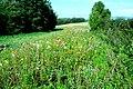 Haie fleurie à Saint-Hilaire-les-Andrésis - Loiret - France.jpeg