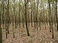 Hambach forest 19.jpg