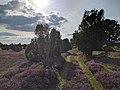 Heide-Pfad im Sonnenschein.jpg