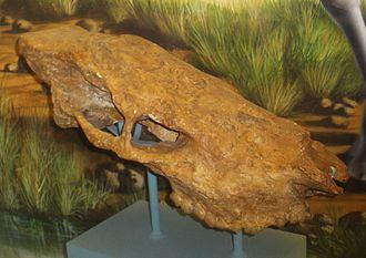 Helladotherium - Image: Helladotherium duvernoyi 1