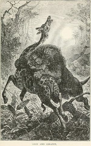 Henry Scherren - Lion and Giraffe from Scherren's 1895 Popular History of Animals for Young People