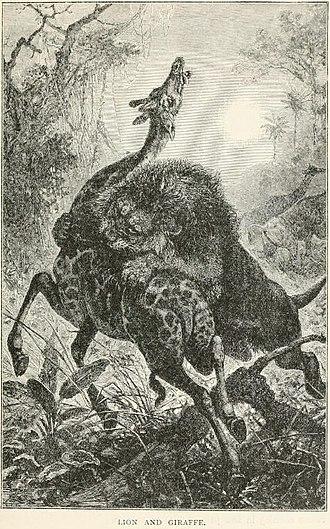 Henry Scherren - Lion and Giraffe from Scherren's 1895 Popular History of Animals for Young People