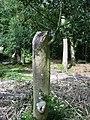 Holly pollard,near Holmsley inclosure, New Forest. - geograph.org.uk - 554604.jpg