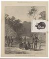 Homo sapiens - Santa Cruz-eilanden - 1871 - Print - Iconographia Zoologica - Special Collections University of Amsterdam - UBA01 IZ19500142.tif