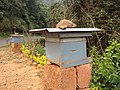 Honey cultivation box, Coorg.jpg