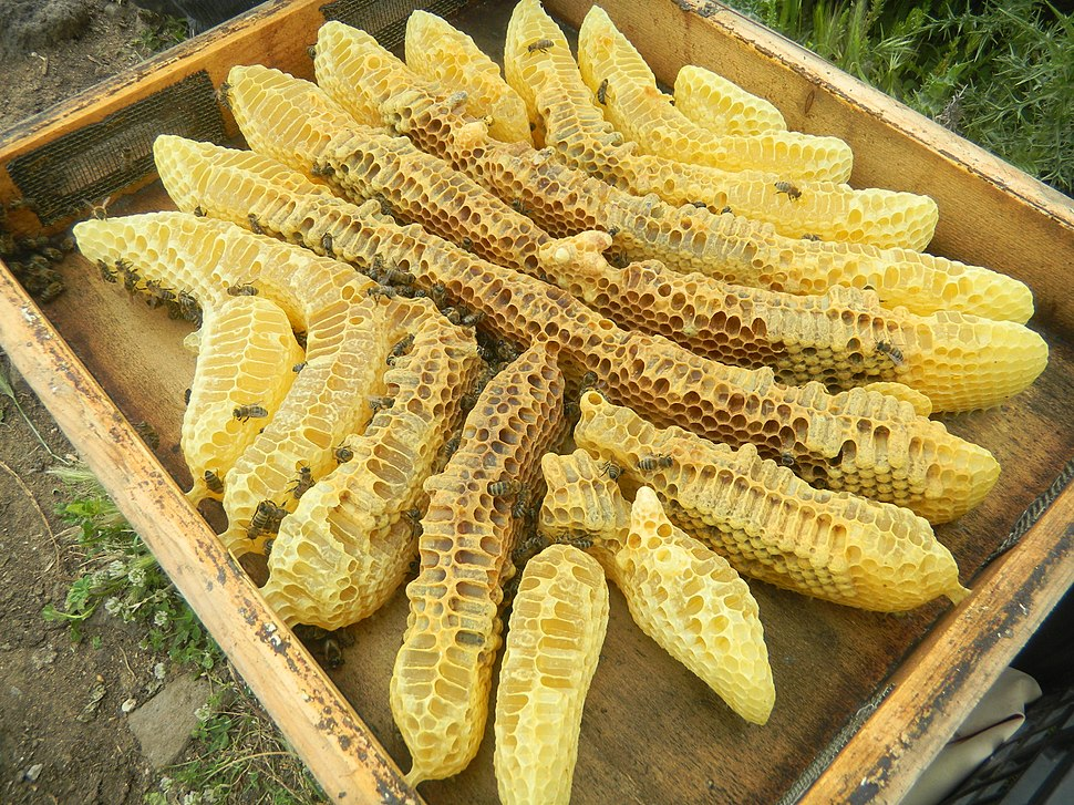 Honig - μέλι aus Mesotopos - panoramio