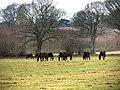 Horses grazing - geograph.org.uk - 708994.jpg