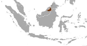 Hose's palm civet - Image: Hose's Palm Civet area