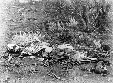 Forensic anthropologists can help identify skeletonized human remains, such as these found lying in scrub in Western Australia, c. 1900-1910. Human remains.jpg