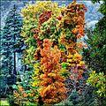 I colori dell'autunno - panoramio (3).jpg
