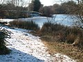 Ice-Covered Hollow Pond, Waltham Forest, London - geograph.org.uk - 1307873.jpg
