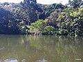 Iguape - SP - panoramio (277).jpg