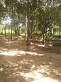 Ilha da serraquebrada MA. TO Imperatriz MA - panoramio (2).jpg