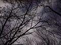 Illinois Prarie Path Shady Skies - panoramio.jpg