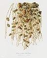 Illustration from Pomona Italiana Giorgio Gallesio by rawpixel00041.jpg