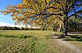 Im Grünfelder Park in Waldenburg 2H1A6049WI.jpg