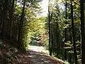 Im Wald, Waldwissensspiel - panoramio.jpg