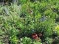 In the garden - Flickr - Kaarina Dillabough.jpg