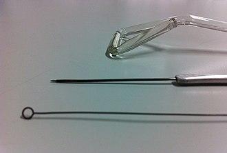 Inoculation needle - Image: Inoculating tools, close up