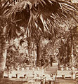 Inside the Palm House, Kew Gardens, 1860s - stereoview (animated 3D effect).jpg