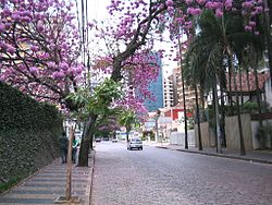 Typical residential area in downtown Campinas. The many trees include an ipê tree with violet flowers