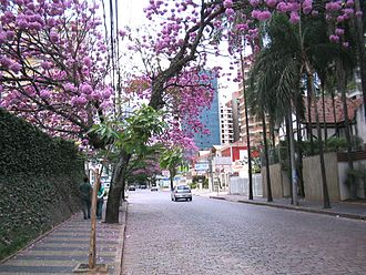 "Campinas - ""Coronel Quirino"" Street in the upper-class residential area of the Cambuí."