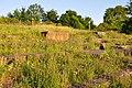 Irchelpark 2010-06-25 20-21-00.JPG