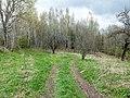 Izvalta parish, Latvia - panoramio - BirdsEyeLV (14).jpg