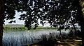 JOCS D'OMBRA, AIGUA I VEGETACIÓ ( ESTANY DE BANYOLES) - panoramio.jpg