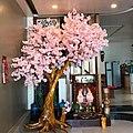 Japanese Cherry Blossom 2020.jpg