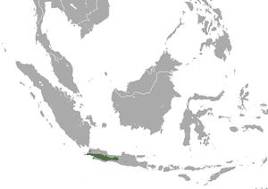 Javan surili - Image: Javan Surili area