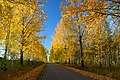 Jesienny poranek - panoramio.jpg
