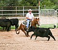 Joe Heim training 3 yr old NCHA Futurity prospect.jpg