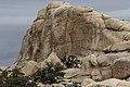 Joshua Tree National Park (33846094202).jpg
