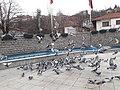 Kızılcahamam pigeons.jpg