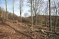 Křivoklátsko - Těžba dřeva III..jpg