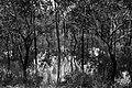 Kakadu National Park-21 (8309758978).jpg