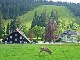 Kaltenbronn (Gernsbach) - Kaltenbronn: deer enclosure, hunting lodge, hotel and ski slope