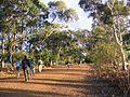 Kangaroo Island (2052420274).jpg