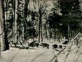 Karpinski-Dziki.jpg