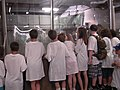 Kids looking at adult salmon in hatchery (4742435334).jpg
