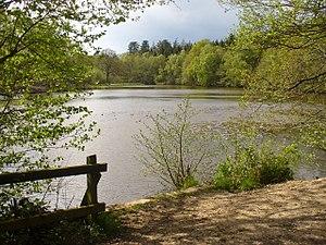 West End Brook - West End Brook at Kiln Pond, Benyon's Inclosure, Hampshire.