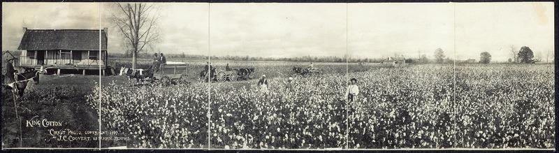 File:King Cotton.tiff