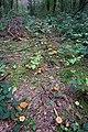 Klatenberge-2758.jpg