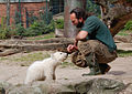 Knut april 2007 1.jpg