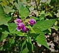 Kocie Gory plants (7).jpg