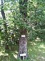 Konara-manyou botanical garden.jpg