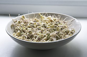 Sprouting - Soybean sprouts in a dish