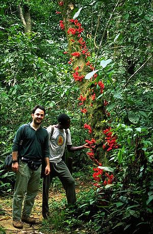Cross-Sanaga-Bioko coastal forests - Cross-Sanaga-Bioko coastal forests.